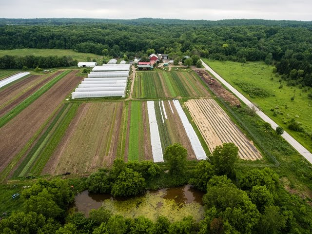 Carrots and Leeks - A day in the summer at Springdale Farm