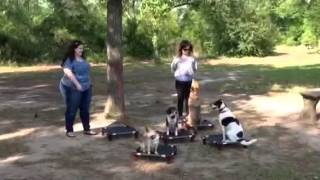 Easter '14 Group Class: Houston Dog Training