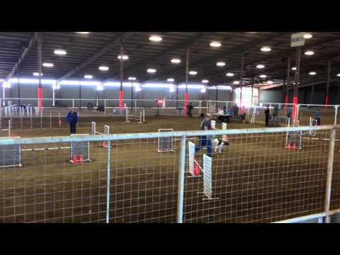 Austin K-9 Xpress AKC agility trial, 11/7/14