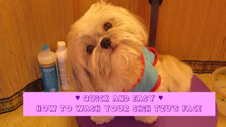 Quick and Easy Shih Tzu face wash - prevent tear stains - How to groom your Shih Tzu