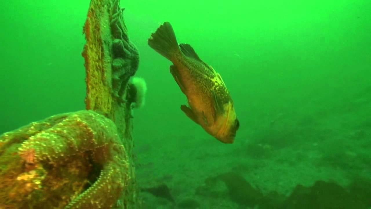 Scuba Dive Redondo Washington