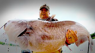 Huge Catfish on Tiny Catfish Bait