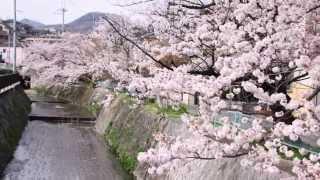 春爛漫Ⅱ(広田山公園・御手洗川・北山貯水池)