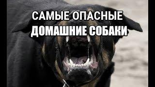 #Самые опасные породы домашних собак