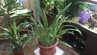 Декоративные комнатные растения и мои аквариумы