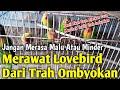 Cara Cepat Menambah Durasi Ngekek Pada Lovebird Bahan Dari Nol  Mp3 - Mp4 Download