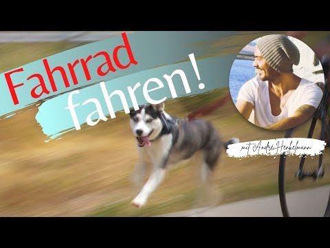 Fahrrad fahren mit dem Hund für Anfänger!