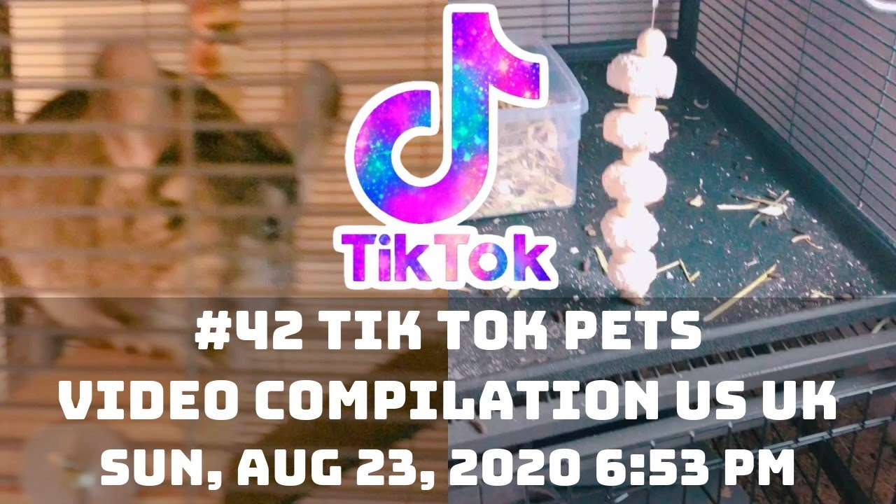#42 TIK TOK PETS VIDEO COMPILATION US UK | 23rd August 2020