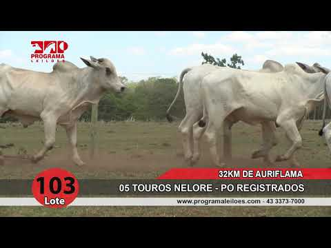 Lote 103