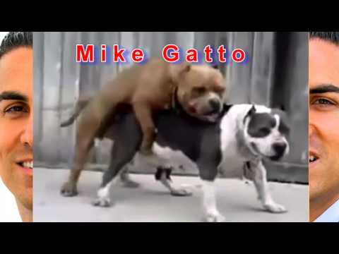 Mike Gatto