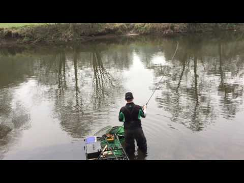 River derwent barbel on the waggler