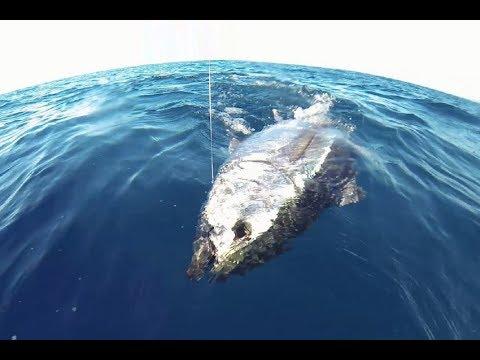 Trabucco TV - Drifting al tonno rosso