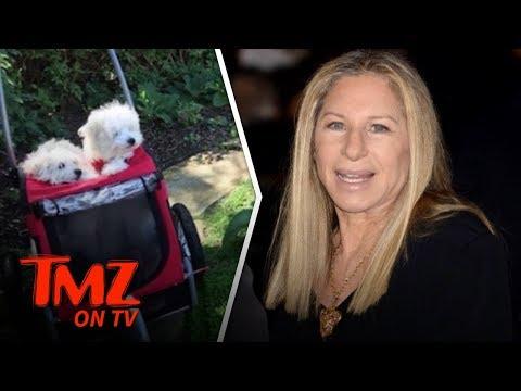 Barbra Streisand Took Her Clone Dogs to Visit Original's Grave   TMZ TV