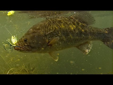 Frog Fishing Bass in Tall Grass