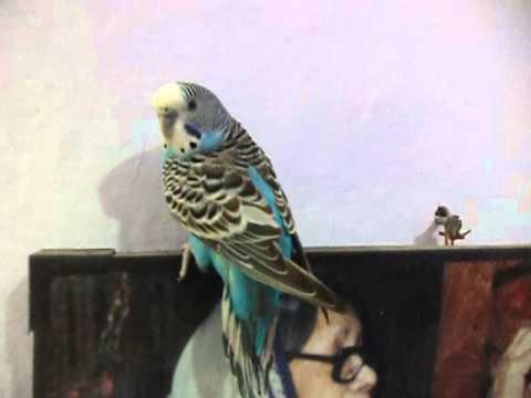 Beautyfull Bird on the Mahadevi Verma photo