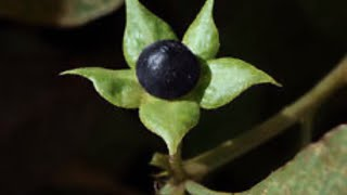 World's Strangest and Most Dangerous Plants