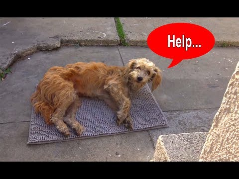 Hope For Paws: Stray dog walks into a yard and then collapses...