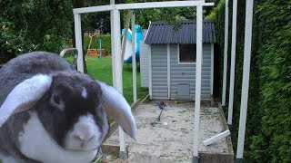 Kaninchenstall mit Auslauf Teil 2