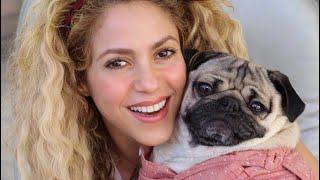 Shakira & Doug The Pug