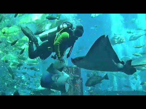 Atlantis The Plam Lost Chamber Aquarium Dubai, UAE