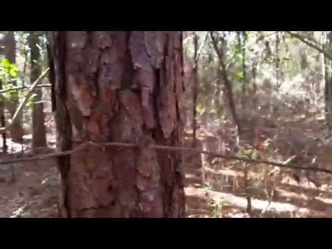 Lost in the woods primitive camping simplified basic compass help Bushcraft eagle jon