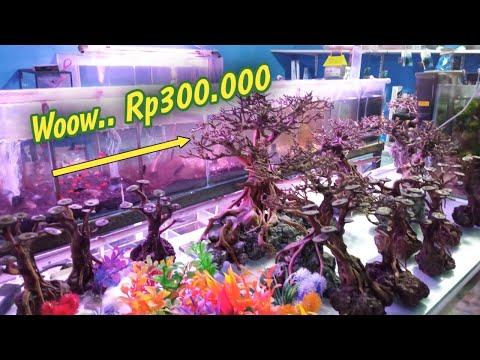 bonsai-aquascape-harganya-300rb-mahal-banget