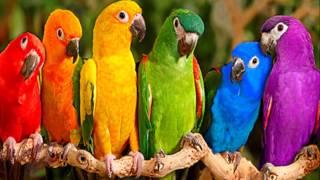 Мой фильм про попугаев