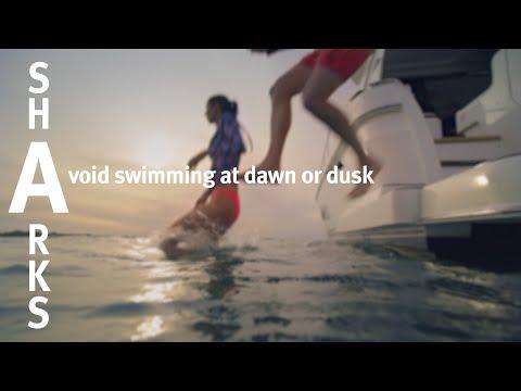 SharkSmart – Avoid Dawn And Dusk