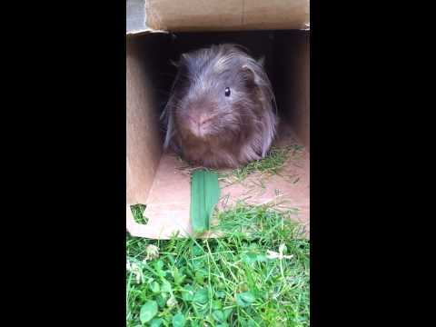 Chalkie loves grass