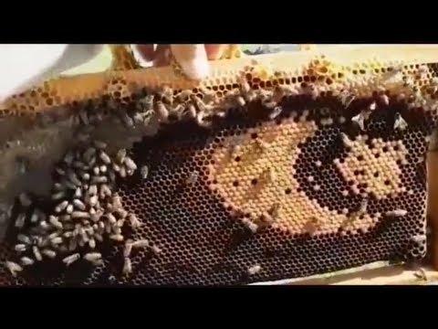Arılar Petek üzerine Türk Bayrağı çizmişler