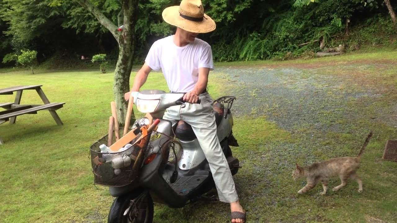 画像: バイクに乗るネコ youtu.be