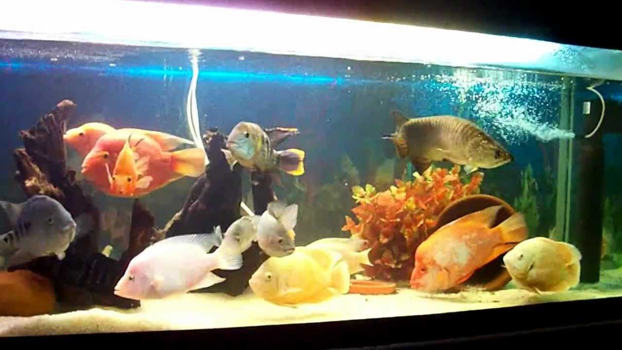 6ft monster fish tank youtube for Youtube fish tank