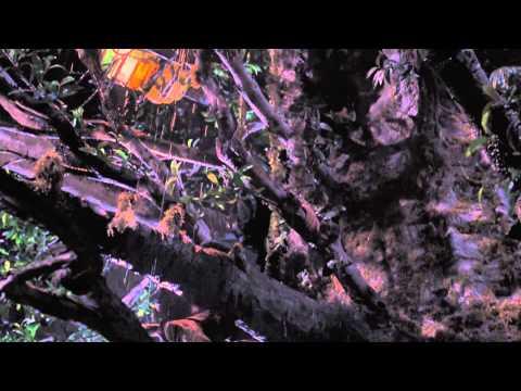 Công Viên Kỷ Jura (3D) - Lại Ở Trong Xe