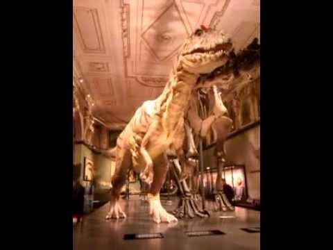 Dinosaur Vienna Natural History Museum