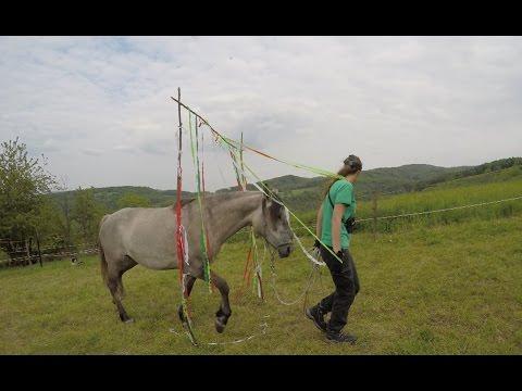 My gray horse, GoPro