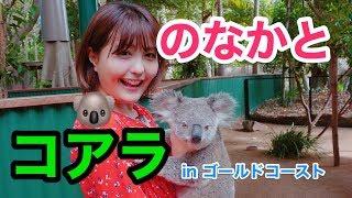 オーストラリアのゴールドコーストでコアラに会いに行ったあいぽん。特...