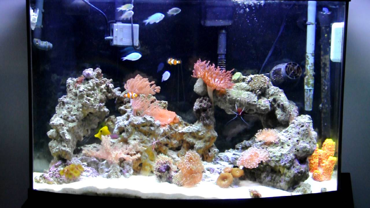 36 gallon bow saltwater aquarium youtube for 38 gallon fish tank
