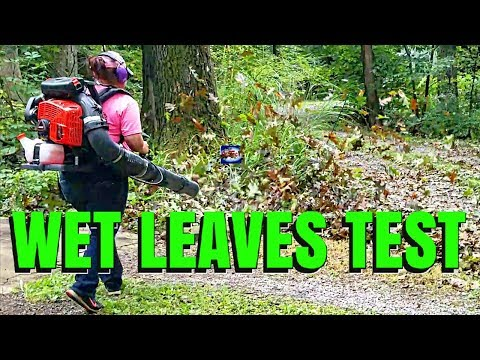 Best Leaf Blower Test
