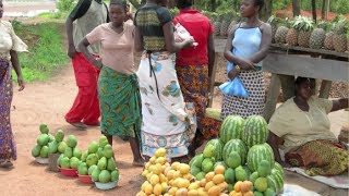 Sustainable African agriculture, putting smallholder farmers at the centre of CAADP processes - 2014