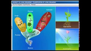 CBSE Class 9 Science Diversity in Living Organisms 1 Classification of Living Organisms