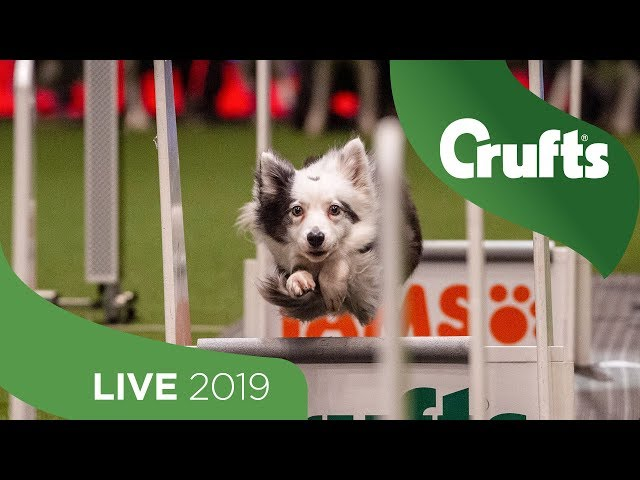 Crufts 2019 Day 1 - Part 2 LIVE