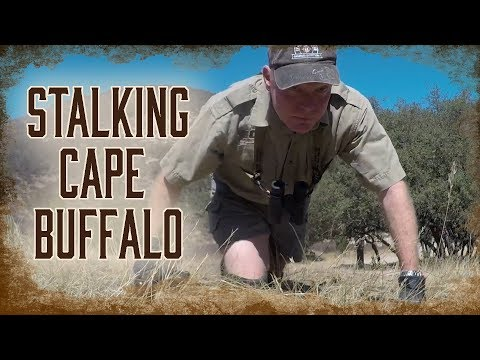 How To Stalk a African Cape Buffalo | 5