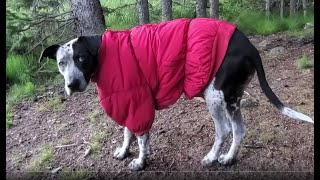 Pack Goat Hiking, Camping, Fishing & Firebox Stove Cooking With My Dogs Ash & Juni Part 02/04