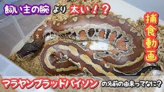 両爬奇蟲の魅力を多くの方に知ってもらい、マイノリティーな飼育者や生...