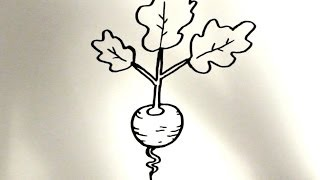 How to Draw a Cartoon Radish