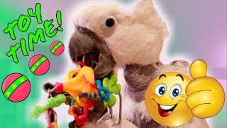 my-parrots-playing-with-their-new-toys