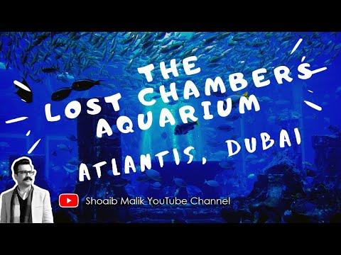 The Lost Chambers Aquarium, Atlantis The Palm, Dubai