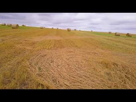 Etchilhampton CROP CIRCLE 10.8.2018 GHOST Formation