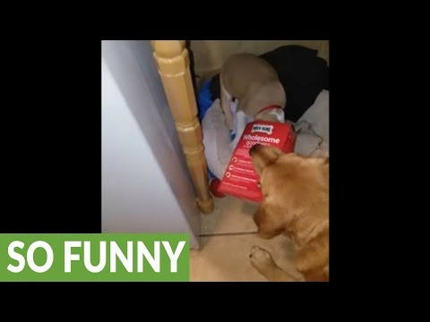 Dog rescues puppy with box stuck on her head