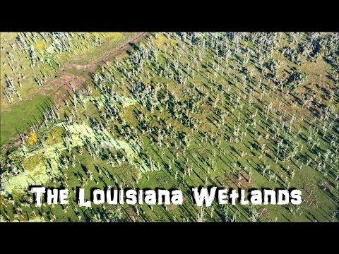 The Louisiana Wetlands